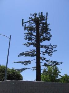 LA_tree_0253