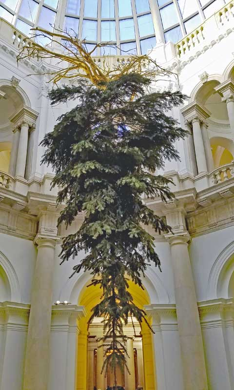 A view of the tree from below