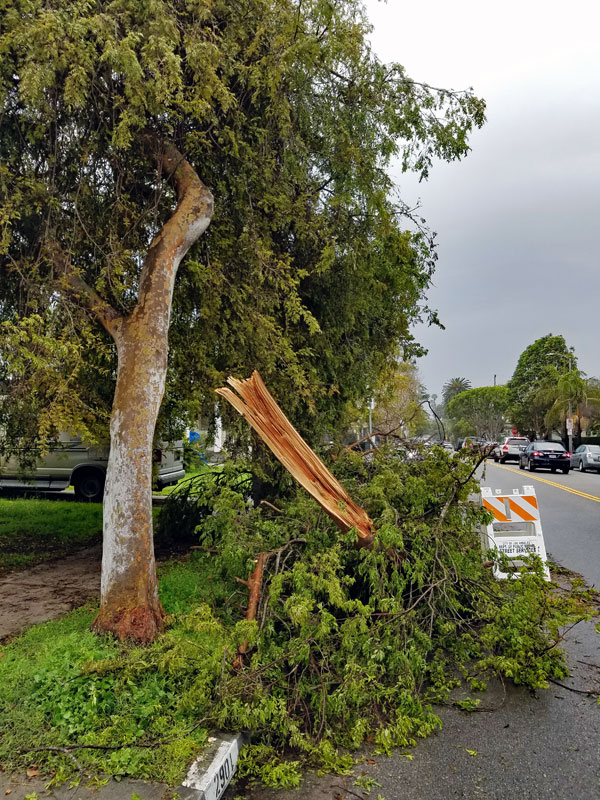 Tree that was damaged by the storm as seen on Tuesday February 21