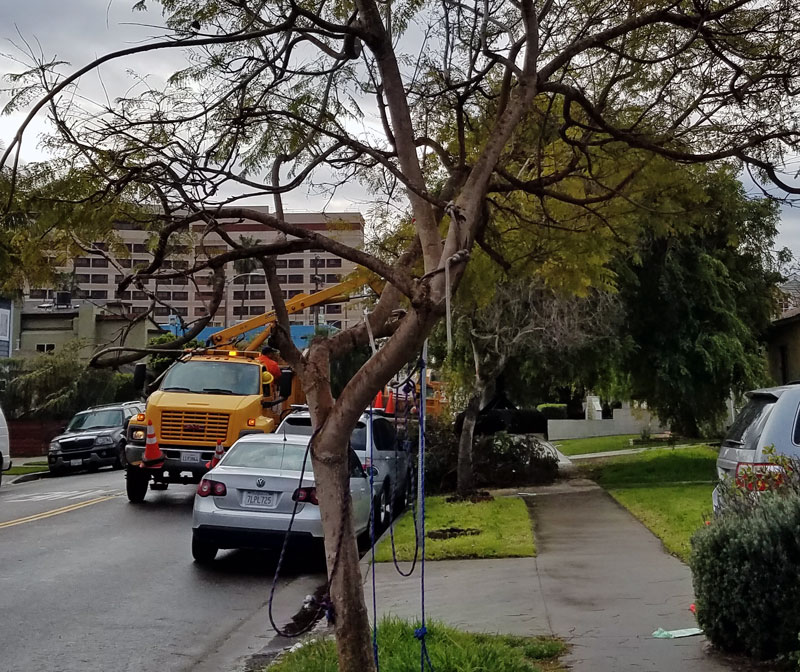 The debris from the tree damaged in last weekends storm was cleaned up by a city crew this morning.