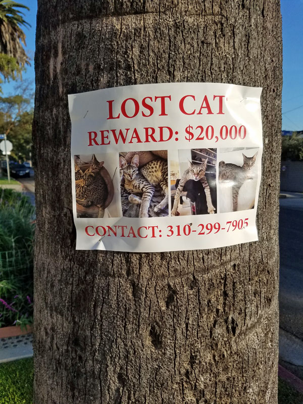 Lost Cat award flier in Venice