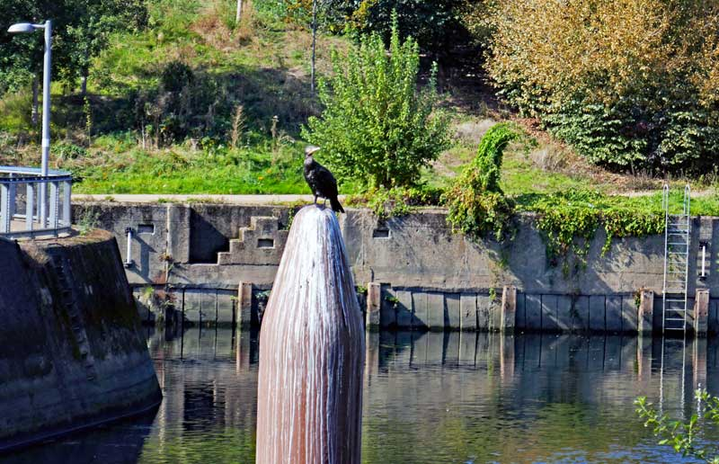 Wildlife like this bird loves the Lea River.