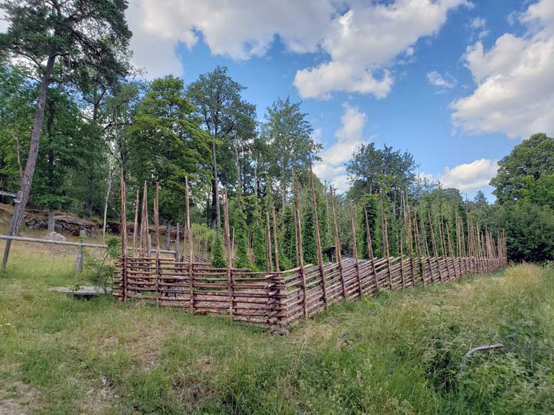 """Linné liked beer, thus he had a hop garden on the property, this is a recent recreation of that hop garden. The name designated to hops by Linné was """"Humulus lupulus""""."""