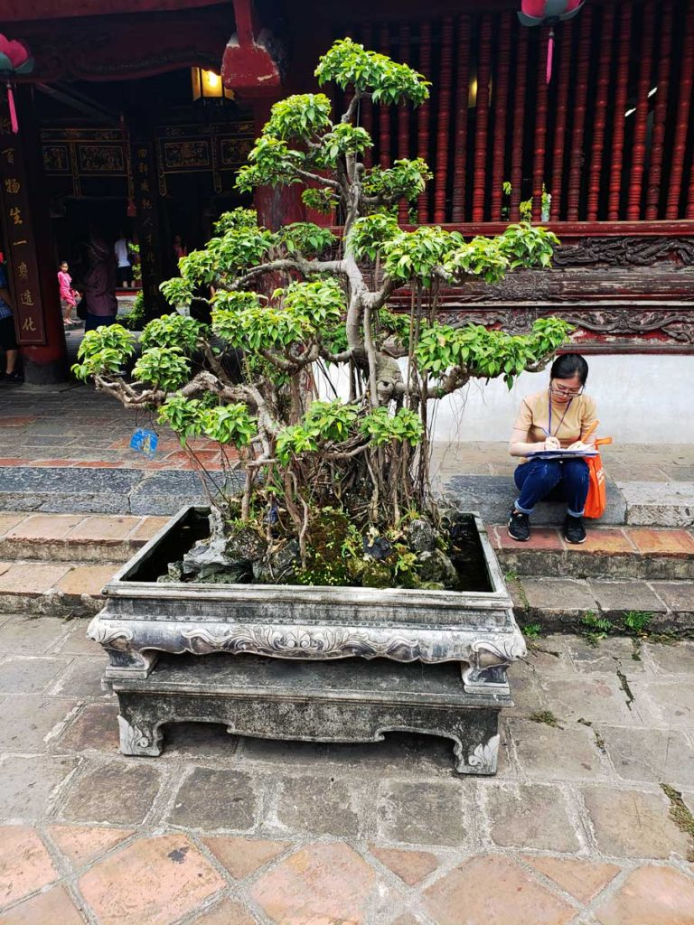 A Bonzai tree at the Temple of Literature.