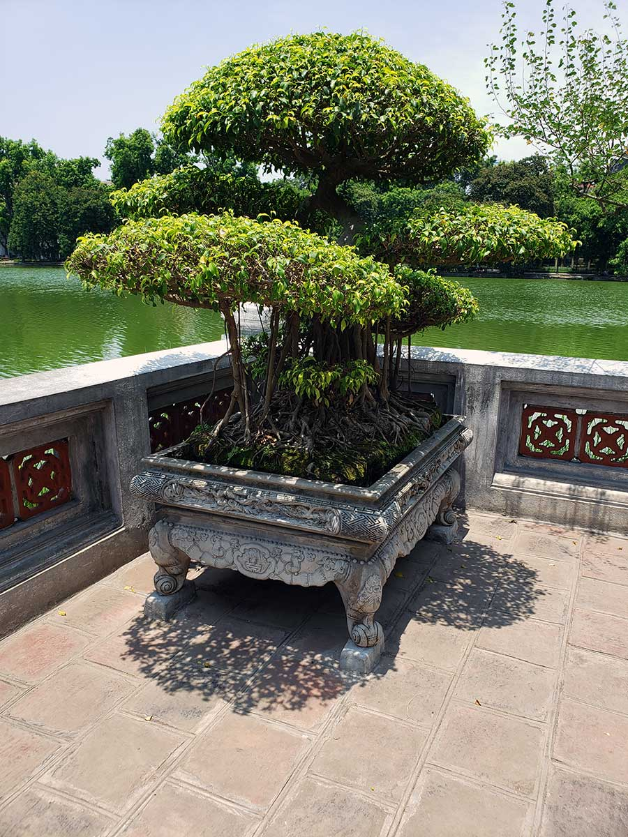 Bonsai outside the temple lakeside.