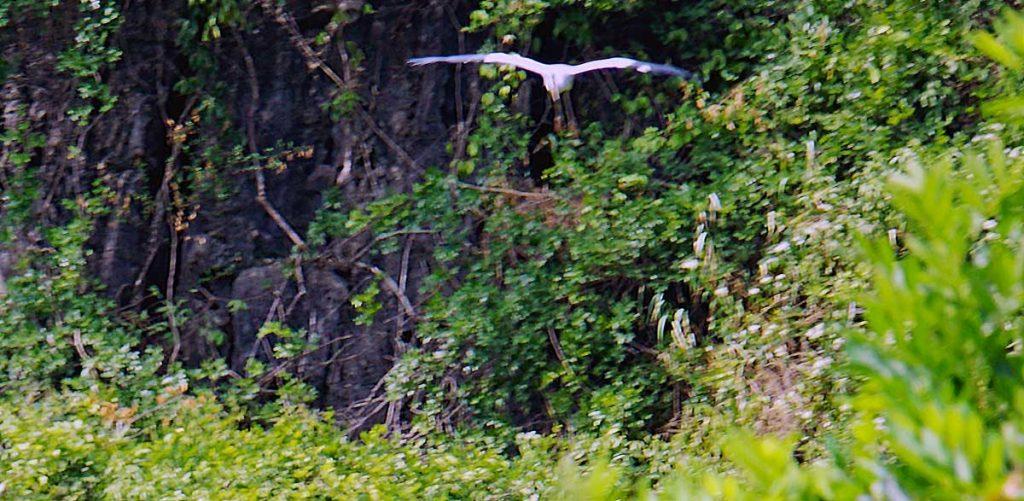 Asian Open bill Stork on approach.