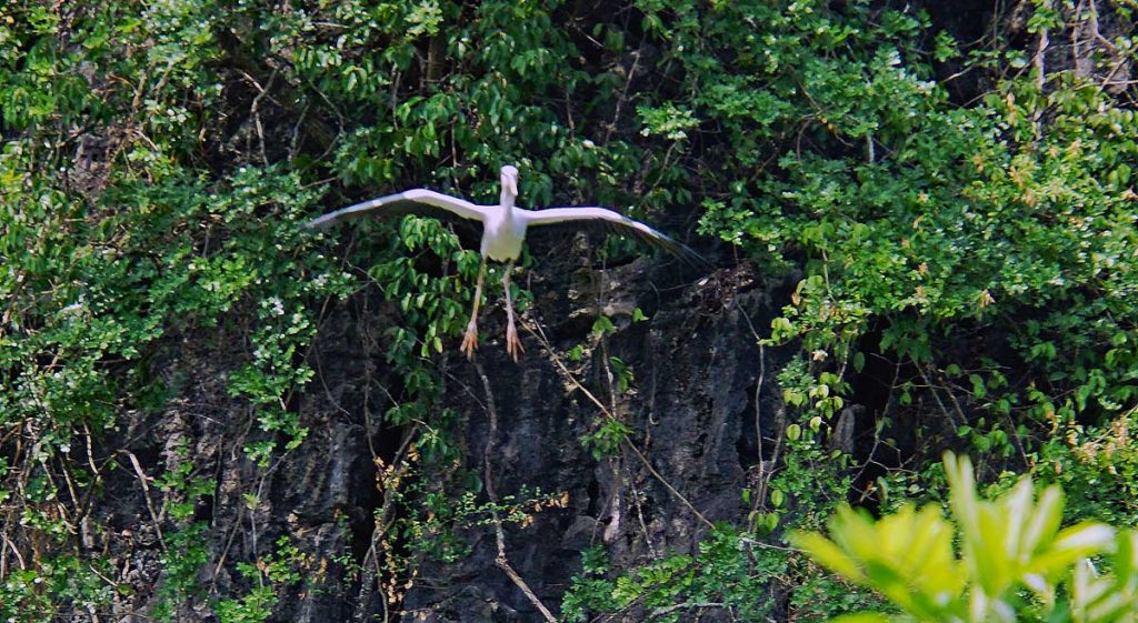 Asian Open bill Stork cleared for landing.