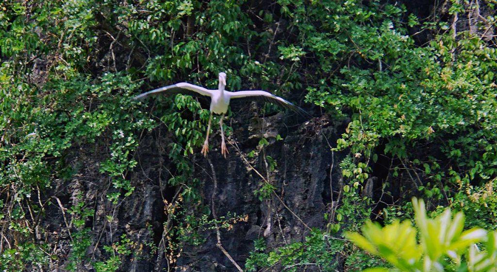 Asian Open bill Stork cleared for landing.
