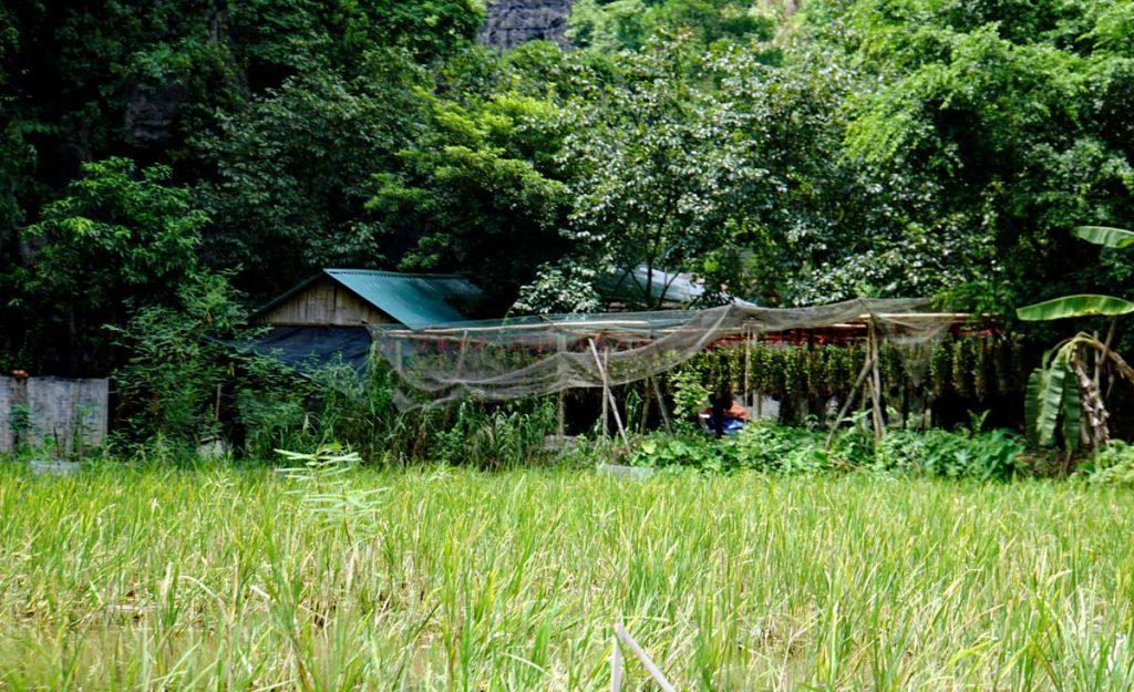 A homestead along the river.